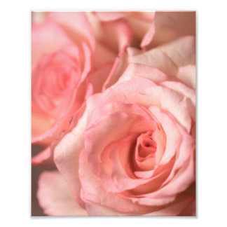 Pink Roses Art Photo