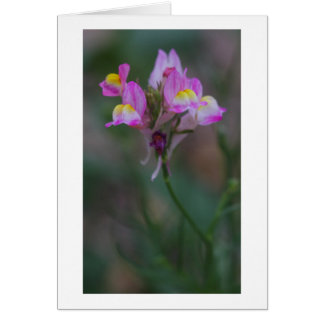 pink snapdragons card