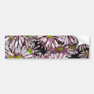 Pink Spoon-petaled Chrysanthemums flowers Bumper Sticker