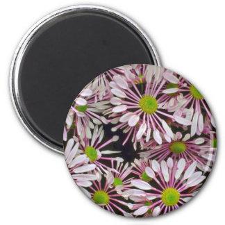 Pink Spoon-petaled Chrysanthemums flowers Fridge Magnets