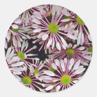 Pink Spoon-petaled Chrysanthemums flowers Round Sticker