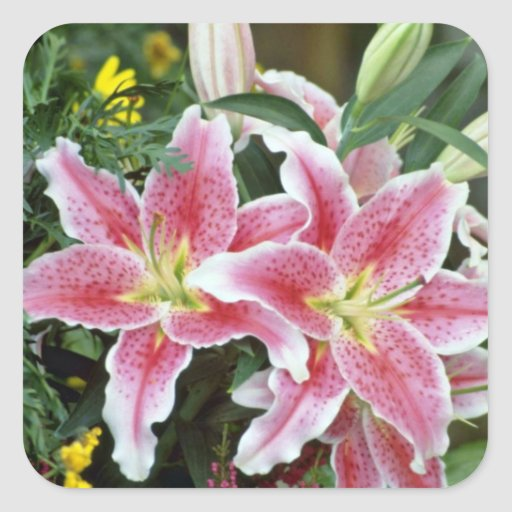Pink Spotted Lilies flowers Square Sticker