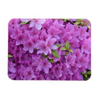 Pink Spring Azaleas Magnet