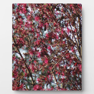 Pink Spring Blooms Plaques