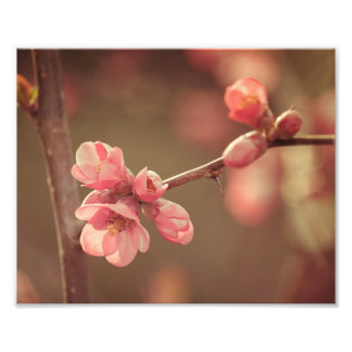 Pink Spring Blossoms Art Photo