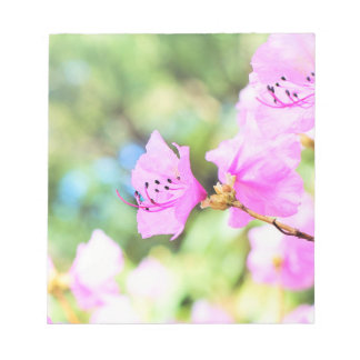 Pink Spring Blossoms Notepad