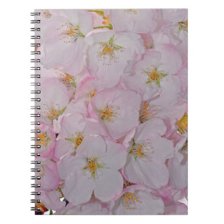 Pink spring cherry blossoms spiral notebooks