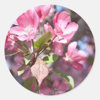 Pink Spring Flower Blossoms Classic Round Sticker