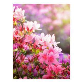 Pink spring flowers postcard