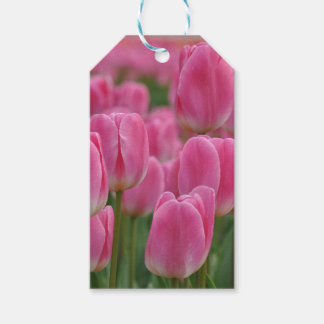 Pink spring tulips floral print pack of gift tags