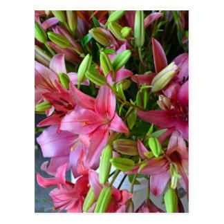 Pink stargazer lilies postcard
