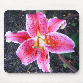 Pink Stargazer  Lily Mouse Pad
