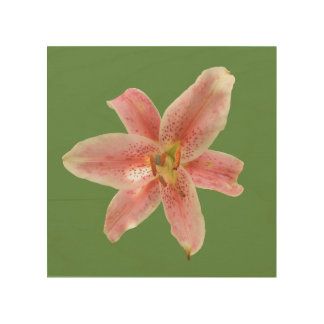 Pink Stargazer on Green Background Wood Wall Art