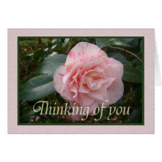 Pink striped Camellia. Thinking of you. Card