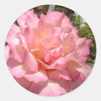 Pink Tea Rose Classic Round Sticker