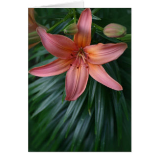 Pink Tiger Lily Flower Card