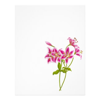 Pink Tiger Lily Letterhead