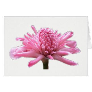Pink Torch Ginger Card  - Blank