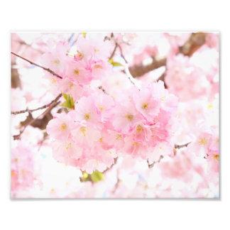 Pink Tree Sakura Cherry Blossom Art Photo