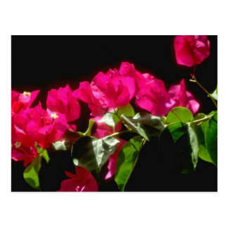 Pink Tropical flowers, Ocho Rios flowers Postcard