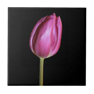 Pink Tulip Flower Photo Solid Black Background Tile