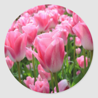 Pink Tulip Stickers