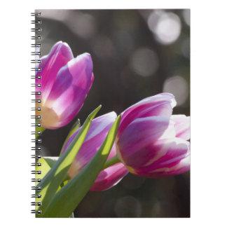 Pink Tulips Bokeh Notebook