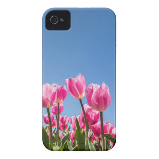 Pink tulips field with blue sky iPhone 4 covers