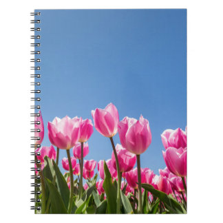 Pink tulips field with blue sky notebook