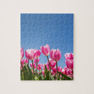 Pink tulips field with blue sky puzzles