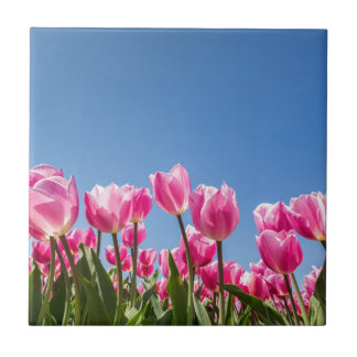 Pink tulips field with blue sky tile