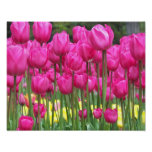 Pink Tulips Floral Poster