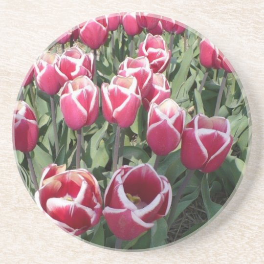 Pink tulips from Holland Coaster