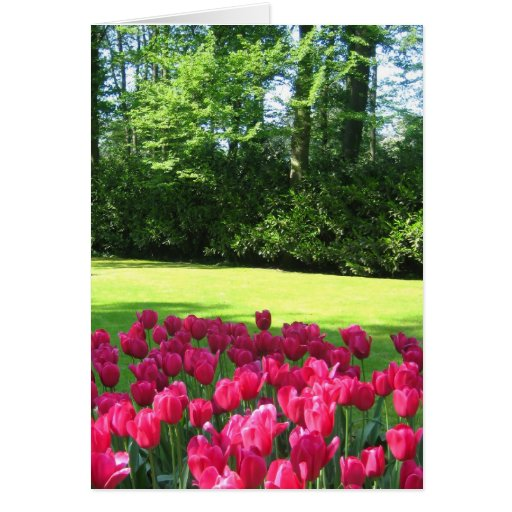 Pink tulips garden - Card
