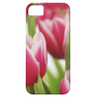 Pink tulips iPhone 5 covers