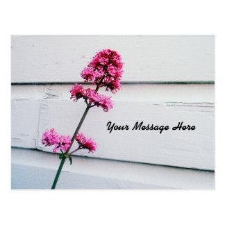 Pink Valerian Flower Postcard | Customize