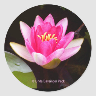 Pink Water lily Classic Round Sticker