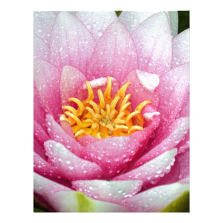 PInk water lily flower Letterhead Template