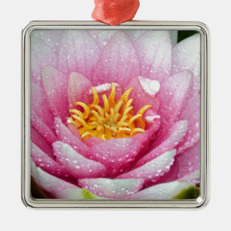 PInk water lily flower Metal Ornament
