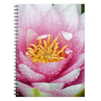 PInk water lily flower Spiral Note Books