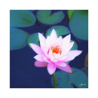 Pink Water Lily in Lily Pond Canvas Print