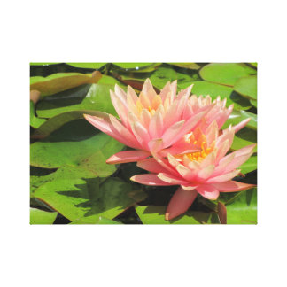 Pink water lily in pond canvas print