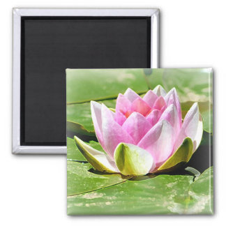Pink Water Lily Magnet - Square