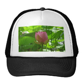 Pink Water Lily - Now Opening Trucker Hat