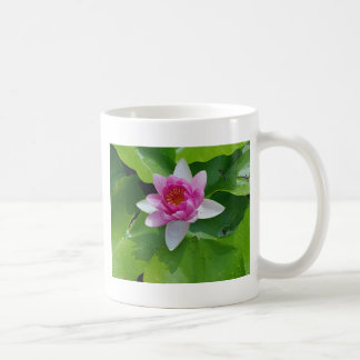 Pink Water Lily On Green Pads Photography Coffee Mug
