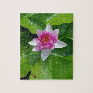 Pink Water Lily On Green Pads Photography Jigsaw Puzzle