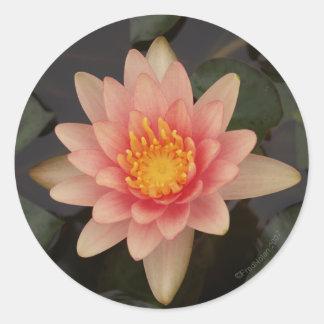 Pink Water Lily v1 Sticker