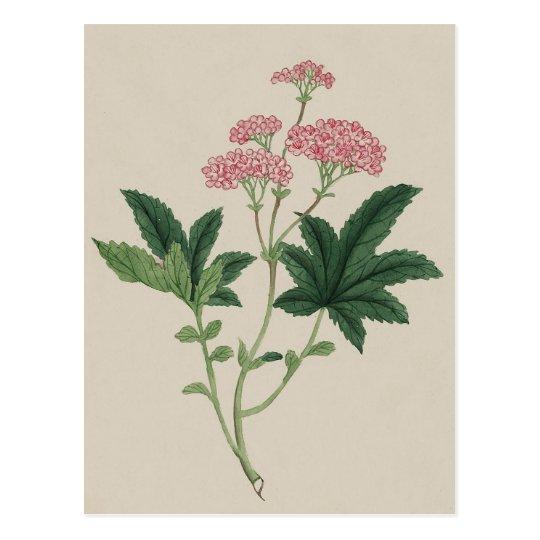 Pink Watercolour Flower Vintage Botanical Print Postcard