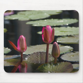 Pink Waterlilies Mouse Pad