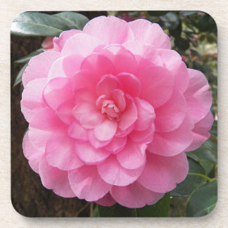 Pink Waterlily Camellia Floral Coaster